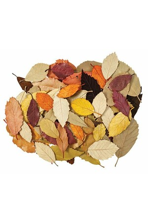 Natural Leaves - Pack of 90