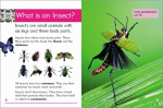 Go Facts Animals - Insects - Sample Page