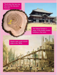 Go Facts - Natural Resources - Timber - Sample Page