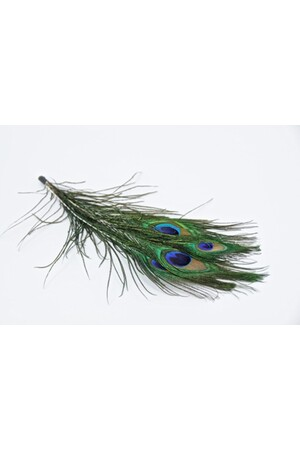 Feathers - Peacock Eye: Natural (Pack of 5)